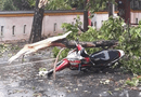 Tin trong nước - Bão số 5 đổ bộ khiến cây đổ đè chết 1 người, 29 người bị thương