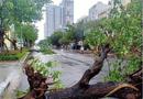 Tin trong nước - Nhiều tỉnh miền Trung xuất hiện gió lốc, hàng chục ngôi nhà tốc mái vì ảnh hưởng của bão số 5