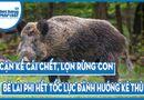 Video-Hot - Video: Cận kề cái chết, lợn rừng con bẻ lái phi hết tốc lực đánh hướng kẻ thù