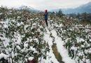Tin trong nước - Dự báo thời tiết mới nhất hôm nay 14/12: Miền Bắc rét đậm, rét hại