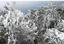 Tin trong nước - Đón không khí lạnh tăng cường, Mẫu Sơn xuống 1 độ C