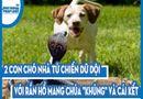 """Video-Hot - Video: 2 con chó nhà tử chiến dữ dội với rắn hổ mang chúa """"khủng"""" và cái kết"""