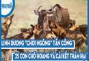 """Video-Hot - Video: Linh dương """"chơi ngông"""" tấn công lại 25 con chó hoang và cái kết thảm hại"""