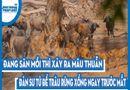 Video-Hot - Video: Đang săn mồi thì xảy ra mâu thuẫn, đàn sư tử để trâu rừng xổng ngay trước mắt