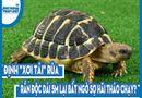 """Video-Hot - Video: Định """"xơi tái"""" rùa, rắn độc dài 5m lại bất ngờ sợ hãi tháo chạy?"""