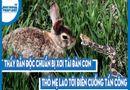 Video-Hot - Video: Thấy rắn độc chuẩn bị xơi tái đàn con, thỏ mẹ lao tới điên cuồng tấn công