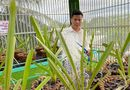 Cần biết - Nguyễn Diên Trung: 8X Bình Phước sở hữu vườn lan rừng giá trị cao