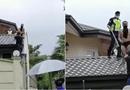 Tin thế giới - Tên trộm bị chó dọa trốn lên tận mái nhà, tình cảnh lúc bị bắt không thể thê thảm hơn