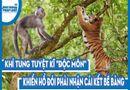 """Video-Hot - Video: Khỉ tung tuyệt kĩ """"độc môn"""" khiến hổ đói phải nhận cái kết bẽ bàng"""