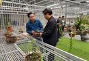 Truyền thông - Thương hiệu - Cần tăng cường liên kết để phát triển ngành hoa lan Việt Nam
