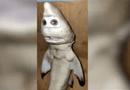 Tin thế giới - Indonesia: Ngư dân sửng sốt khi bắt được cá mập đột biến có hình mặt người