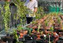 Truyền thông - Thương hiệu - Nghệ nhân Đinh Quyền và vườn lan giá trị ở Ninh Bình