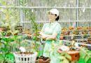 Truyền thông - Thương hiệu - Thái Anh Tuyết: Tôi vẫn đeo đuổi cả hoa lan và bất động sản