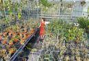 Truyền thông - Thương hiệu - Bà chủ vườn lan Thu Thanh: Quyết tâm chinh phục loài lan kiêu kỳ