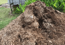 Đời sống - Đống cỏ khô bỗng dưng động đậy, chủ nhà lại gần kiểm tra rồi chạy vội vì thấy thứ này