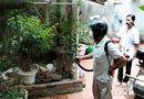 Sức khoẻ - Làm đẹp - Ghi nhận 8 ổ dịch sốt xuất huyết ở Hà Nội