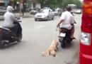 """Gia đình - Tình yêu - Đắng lòng nhìn những kiểu """"hành hạ chó"""" của giới trẻ Việt"""