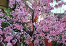 Gia đình - Tình yêu - Bí quyết giữ cây đào luôn đẹp lung linh trong ngày Tết