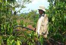 """Tây Nguyên - Đắk Lắk: Khô hạn kéo dài, hàng nghìn diện tích cây trồng """"khát nước"""""""