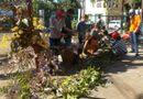 Tây Nguyên - Nở rộ thú chơi lan rừng ở phố núi Gia Lai