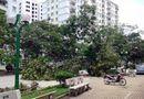 Nóng trong tuần - Giông lốc ở Hà Nội, 5 người thương vong và hàng nghìn cây xanh bị quật đổ