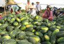 Thị trường - Dưa hấu được mùa, người nông dân khóc, 3 Bộ trưởng nghĩ gì?