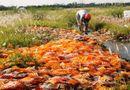 Tin trong nước - Vụ xả thuốc ra đồng: Chuyển hồ sơ cho UBND huyện xử lý