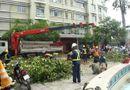 Tin trong nước - Đốn hạ hàng chục cây cổ thụ trước Nhà hát TP.HCM