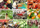 Tin trong nước - Thủ tướng yêu cầu đẩy mạnh đảm bảo an toàn thực phẩm