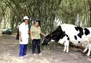 Thị trường - Tháng 1/2015, Vinamilk thu mua sữa bò tươi tăng gần 22%