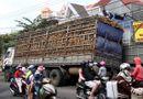 Tin trong nước - Xe tải chở sắn làm sập cầu giữa trung tâm thành phố