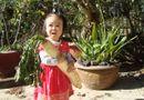 """Tin trong nước - Phát hiện cặp củ cải trắng """"khổng lồ"""" ở Lâm Đồng"""