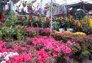 Miền Trung - TP Vinh: Nhộn nhịp cung đường hoa và cây cảnh đón Tết