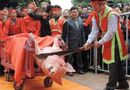Tin trong nước - Bắc Ninh: Lễ hội chém lợn đổi thành lễ hội rước lợn?