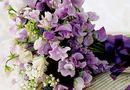 Giáo dục pháp luật - Cách chọn hoa 20/11 tặng thầy cô giáo ưng ý nhất