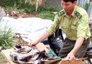 Tài nguyên - Lâm Đồng: Liên tiếp phát hiện voọc chà vá chân đen bị giết hại