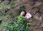 Tin trong nước - Quảng Bình: 3 chị em ruột đi tắm chết đuối trên sông Gianh