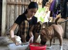 Giáo dục pháp luật - Lộ diện nữ sinh vùng cao thi khối C cả 3 môn đều đạt từ 9 điểm trở lên ở Nghệ An