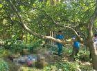 Tin trong nước - Người đàn ông tử vong bí ẩn trong vườn điều ở Đồng Nai