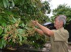 Kinh doanh - Hành trình chinh phục thiên nhiên của lão nông đưa trái ngọt về rừng U Minh