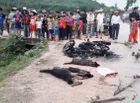 Tin trong nước - Nghi can trộm chó bị người dân đánh chết, đốt xe máy