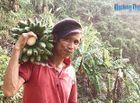 """Tin trong nước - Tiết lộ về cuộc sống của """"người rừng"""" Quảng Ngãi sau 7 năm về làng"""