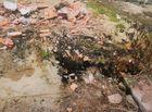 An ninh - Hình sự - Diễn biến mới nhất vụ đào mộ, đốt hài cốt mẹ vợ vì con rể vay 300 triệu không trả lãi