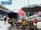 Kinh doanh - Tiểu thương hé lộ bí mật bất ngờ phía sau những trái dừa xiêm 6k tràn lan khắp phố