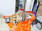 An ninh - Hình sự - Vụ phát hiện hổ 250kg trong nhà dân ở Hà Tĩnh: Tiết lộ về chủ ngôi nhà