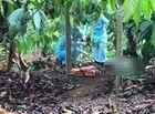 Tin trong nước - Vụ phát hiện phần thi thể nam giới trong rẫy cà phê: Chủ tịch xã tiết lộ về nạn nhân