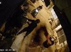 An ninh - Hình sự - TP. HCM: Truy tìm nhóm người tạt sơn, mắm tôm vào nhà dân