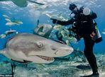 Hình ảnh thợ lặn đùa rỡn với cá mập dưới biển - Ảnh thứ 2