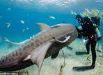 Hình ảnh thợ lặn đùa rỡn với cá mập dưới biển - Ảnh thứ 4