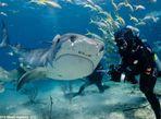 Hình ảnh thợ lặn đùa rỡn với cá mập dưới biển - Ảnh thứ 5